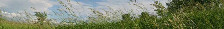 Photo of blowing grasses